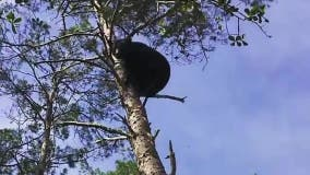 Central Florida couple pleads guilty to attacking bears with dogs