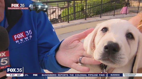Adorable puppy comes out to see the FOX 35 Storm Team Thunder Truck