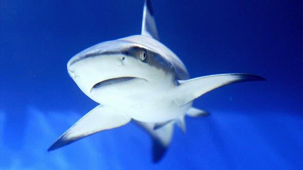 Officials: 12-year-old boy bitten by shark at Bethune Beach