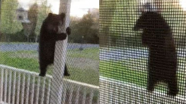 'Get outta there!': Woman films acrobatic bear balancing on porch to eat from bird feeder