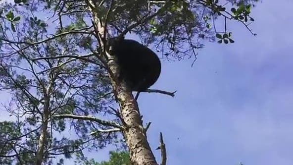 2 plead guilty in Central Florida 'bear baiting' case: report