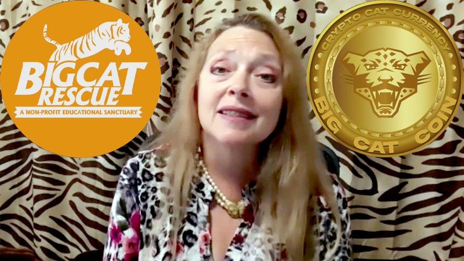 big cat coin