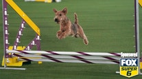 Westminster Dog Show Agility Challenge: How to win $1,000 for free