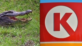 'Freaking people out': Alligator hides under vending machine at Circle K in Florida