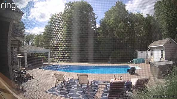 Video shows bear nudging man taking nap by pool