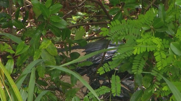 Winter Park Community overtaken by smell of dead animals