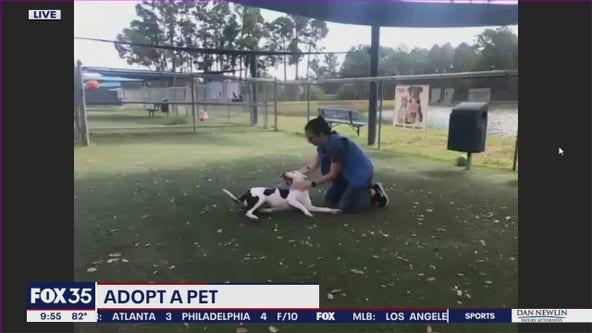 Adopt-a-pet: Meet Gucci