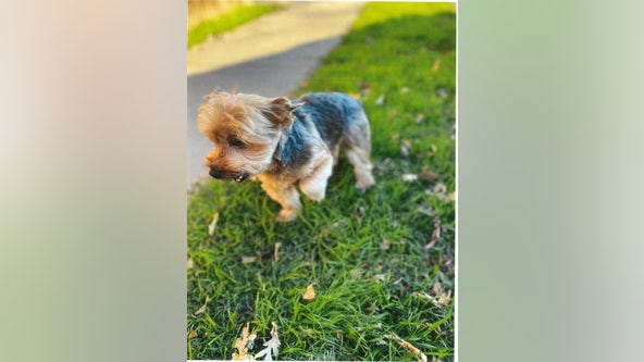 Stockton woman reunited with Yorkshire terrier stolen in San Francisco