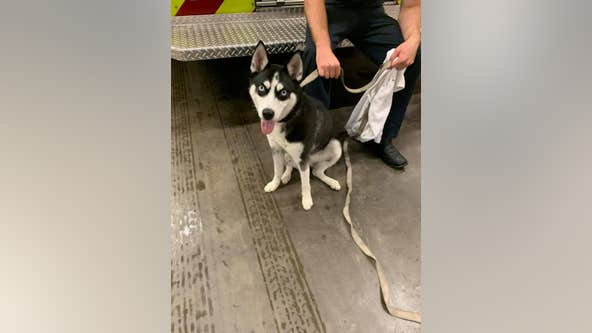 Brevard County firefighters find puppy, look to reunite with owner