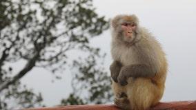 Monkey B virus: Veterinarian dies in 1st case reported in China