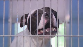 Orange County Animal Services sees spike in animals needing 'forever homes'