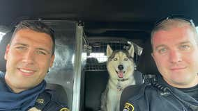 Officers take care of dog after owner is fatally shot