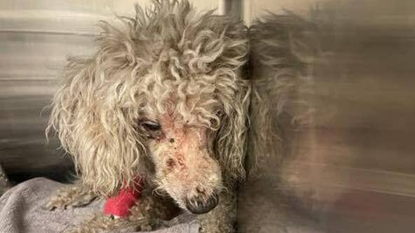 Deputies asking for help after dog found in plastic bag, mouth taped shut