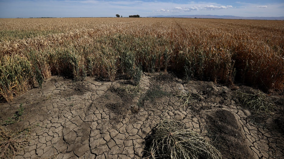 California's Central Valley Struggles With Worsening Drought