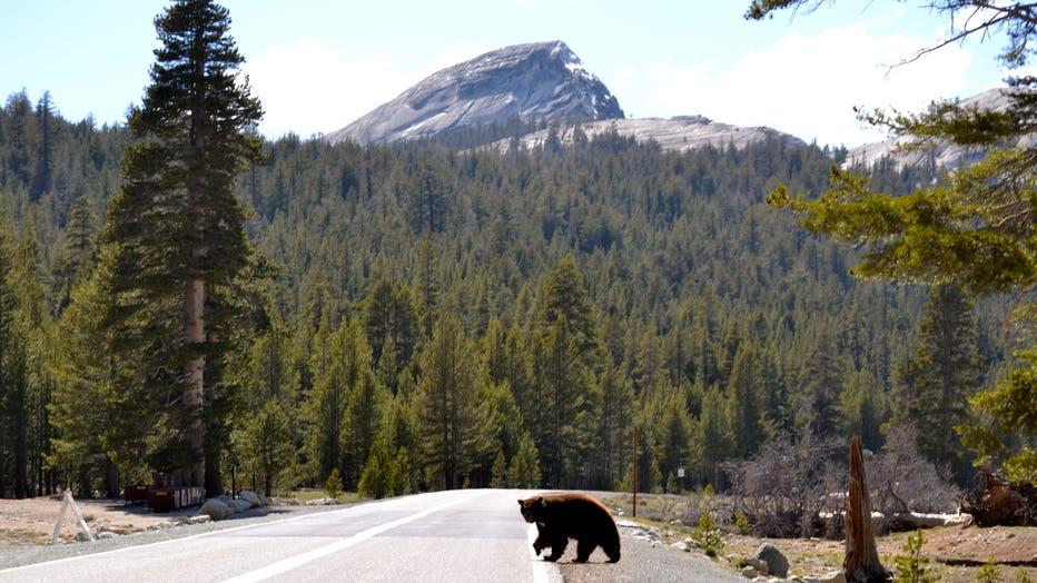 yosemite-bear.jpg
