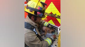 Firefighters rescue 7 dogs from Orange County house fire