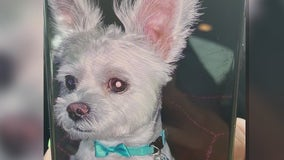 Dogs surrendered after smaller pup is mauled in Apopka