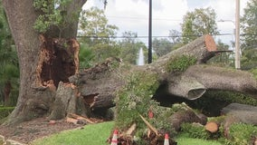 Arborist warns to check the health of your trees
