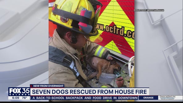 Firefighters rescue seven dogs from Orange County house fire