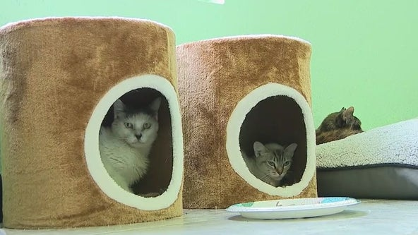 Florida cat rescue needs help paying vet bill to continue operations