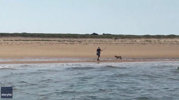 Fishermen rescue woman fending off aggressive coyote on Cape Cod beach