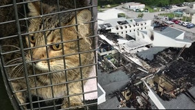 How to help the Pet Alliance of Greater Orlando after fire