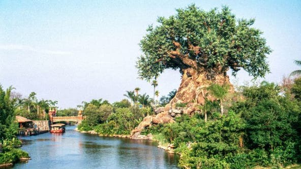 Disney World History: Animal Kingdom and its fan-favorite attractions