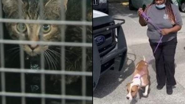 PHOTOS: Pets rescued after devastating Orlando shelter fire