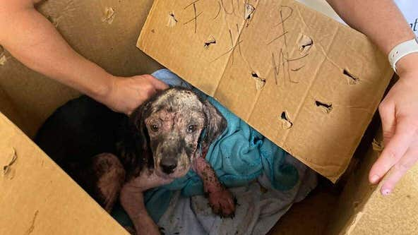 Shelter finds emaciated puppy in box with 'Help Me' written on side