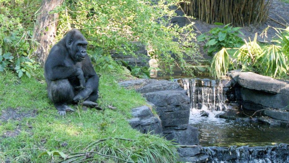 walt disney world animal kingdom Kilimanjaro Safaris