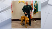 Osceola County Sheriff's Office welcomes new K-9