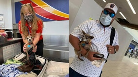 Couple surprised at airport with stowaway in luggage: their Chihuahua