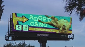 Orange County shelter using billboards to help get 2 longtime residents adopted