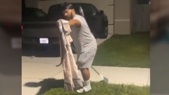 Florida man who trapped gator in trash bin catches big snake in new video