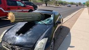 PCSD: Saguaro busts through car windshield in Tucson crash; driver possibly impaired