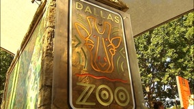 Dallas Zoo begins flex pricing system for admission