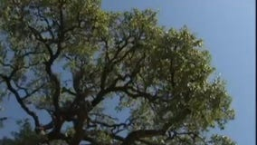Death of Texas trees yields model for future recovery plans