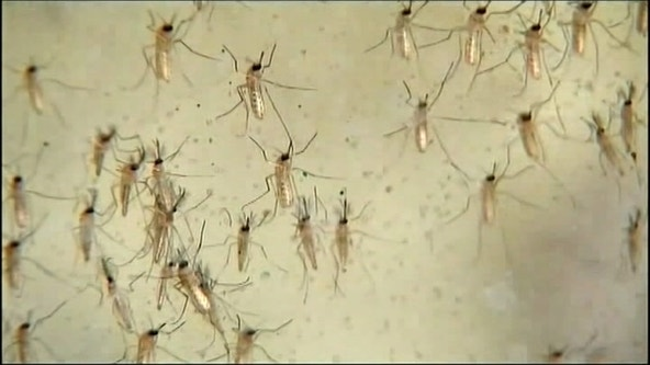 Tarrant County health officials spraying for West Nile Virus in Arlington, Pantego