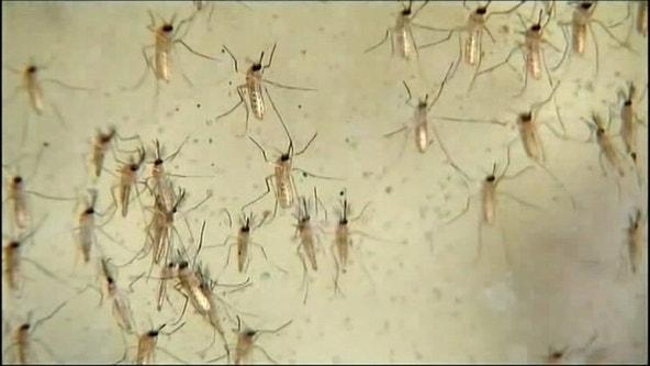Tarrant County health officials spraying for West Nile Virus in Arlington, Pantego