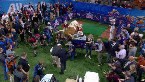 Photographer sues Bevo's owners over incident before 2019 Sugar Bowl