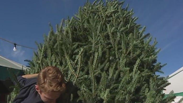 2bc93835-Christmas_tree_shortage_0_20171127031617-407693