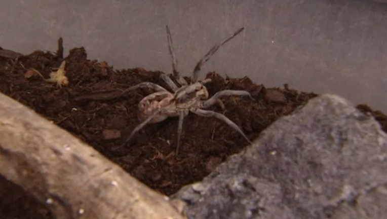 44b96e0d-P-WOLF SPIDER OUTBREAK_00.00.47.29_1491522691966-402429-402429.png