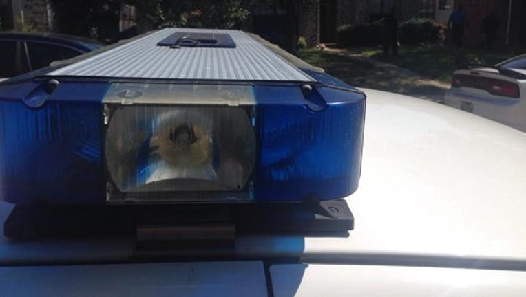 police lights - blue_1439309459365.jpg
