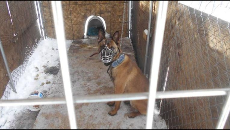 6d5f0c24-Brooklyn Center chained dog-409162
