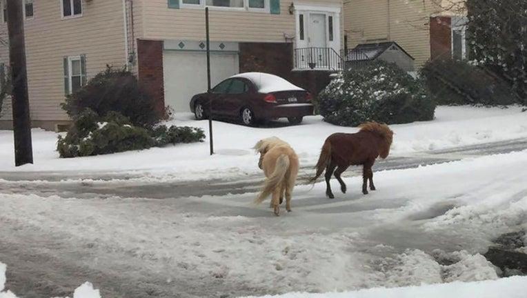 snow ponies_1489516400501-401385.jpg