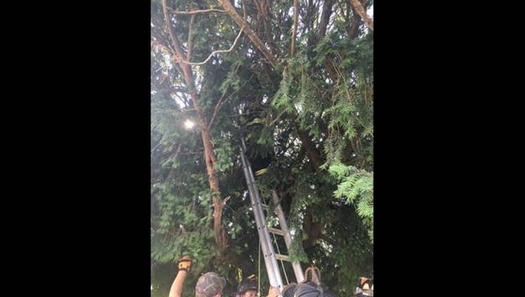 9f21dd11-stuck-in-tree_1469042088304-402970.jpg