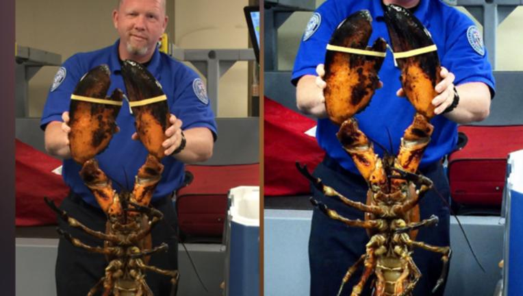a35b2bc4-lobster TSA_1498514915505-407068.PNG