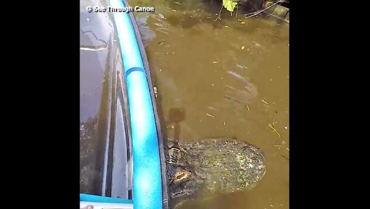 Canoe stuck on gator-402429