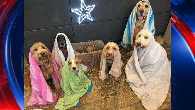 dbc0dfbc-UK dog groomer recreates nativity scene-401720