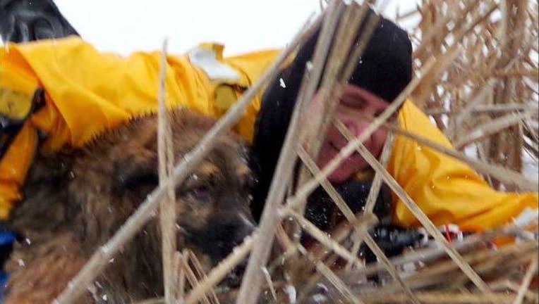 dog_rescue_new_1_1513206977392-405538.JPG